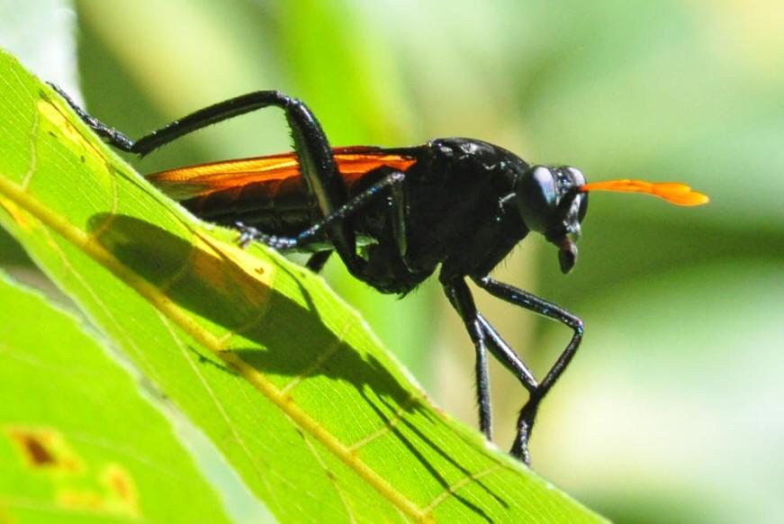 Gave ervaring  Reizigersbeoordelingen  Orange Fly
